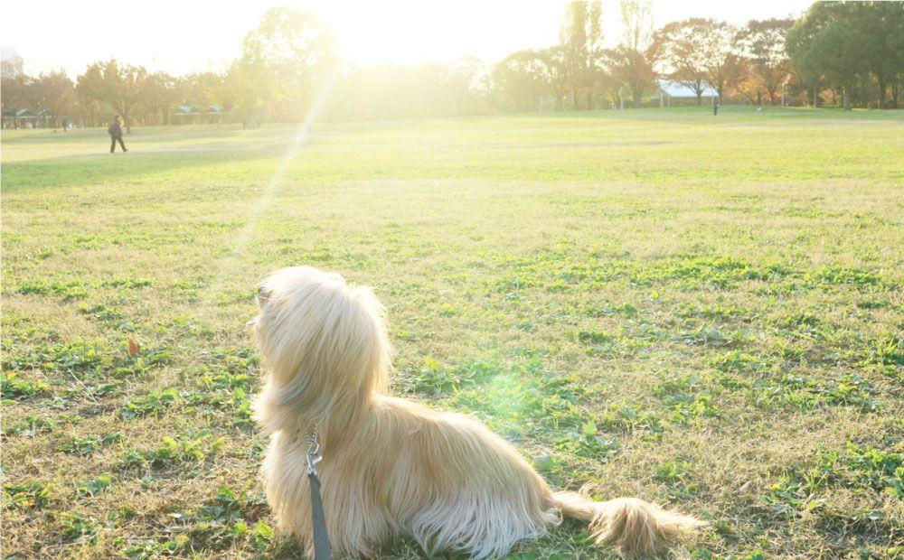 鶴見緑地公園で散歩する犬