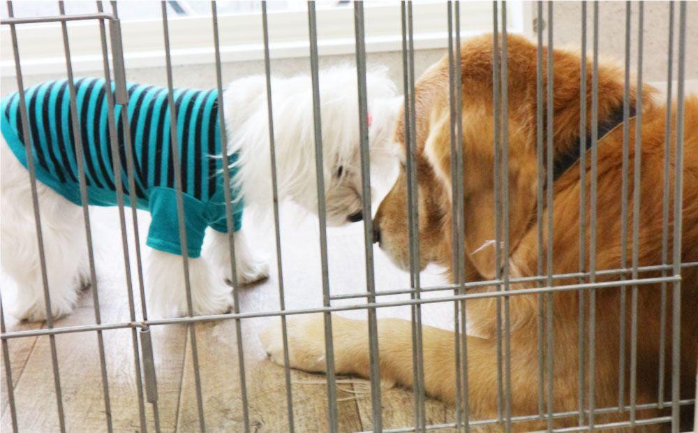 守口市トリミングサロンPoPomeip内の犬2匹